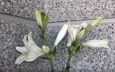 Timelapses con plantas