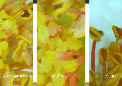 Experimento con plantas. 1º ESO
