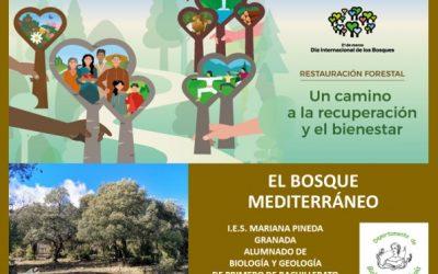 EL bosque mediterráneo